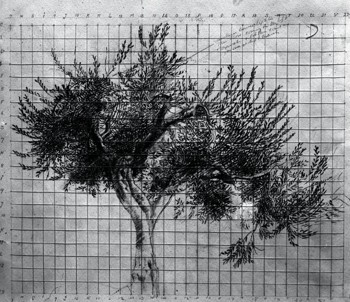 Monnington Collection, Study of a Tree 1, BSR Fine Arts Archive